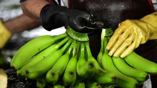 ประโยชน์ของ<strong>กล้วย</strong>หอม #2