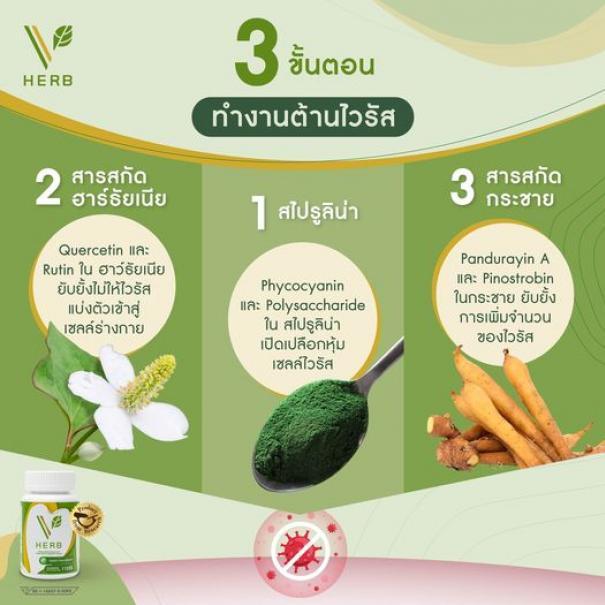วี เฮิร์บ V Herb #4