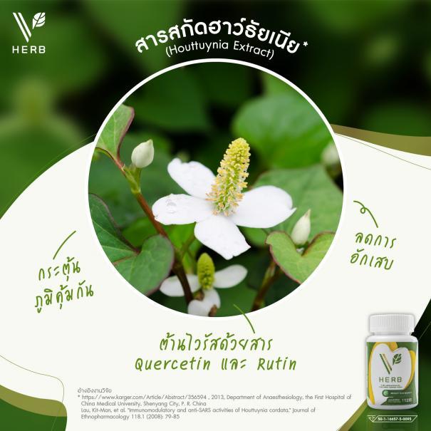 วี เฮิร์บ V Herb #6
